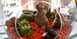 Créez votre terrarium - DIY