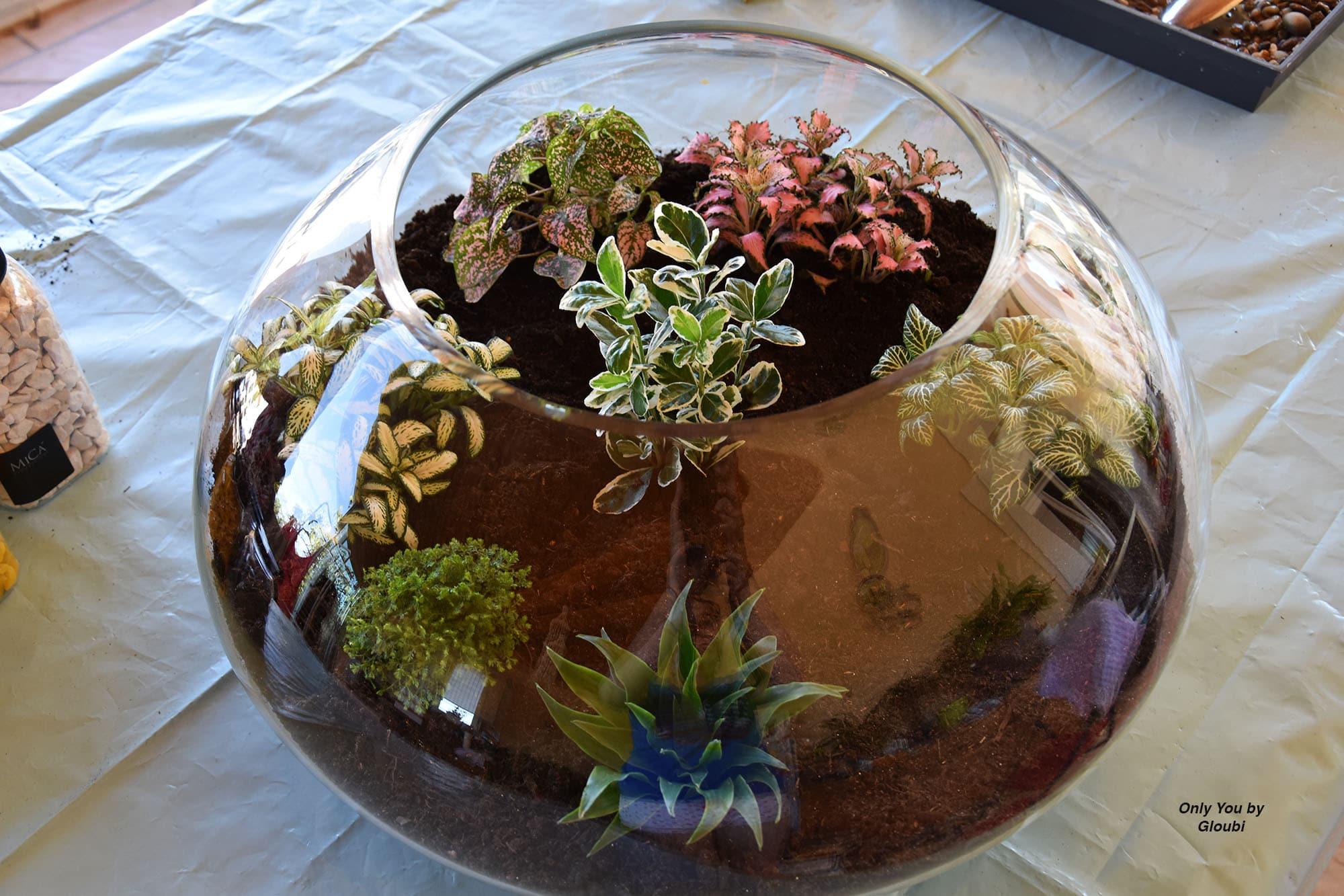 mon terrarium de plantes vertes only you by gloubi. Black Bedroom Furniture Sets. Home Design Ideas