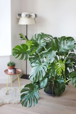 Home Jungle15