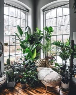 Home Jungle5