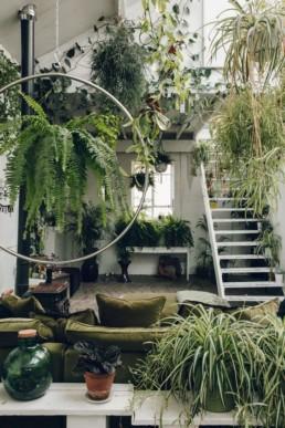 Home Jungle8